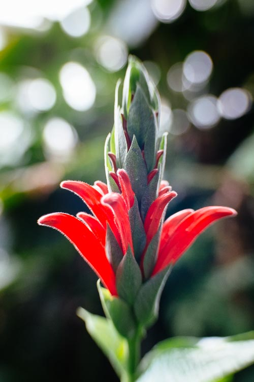 Red Exotic Flower
