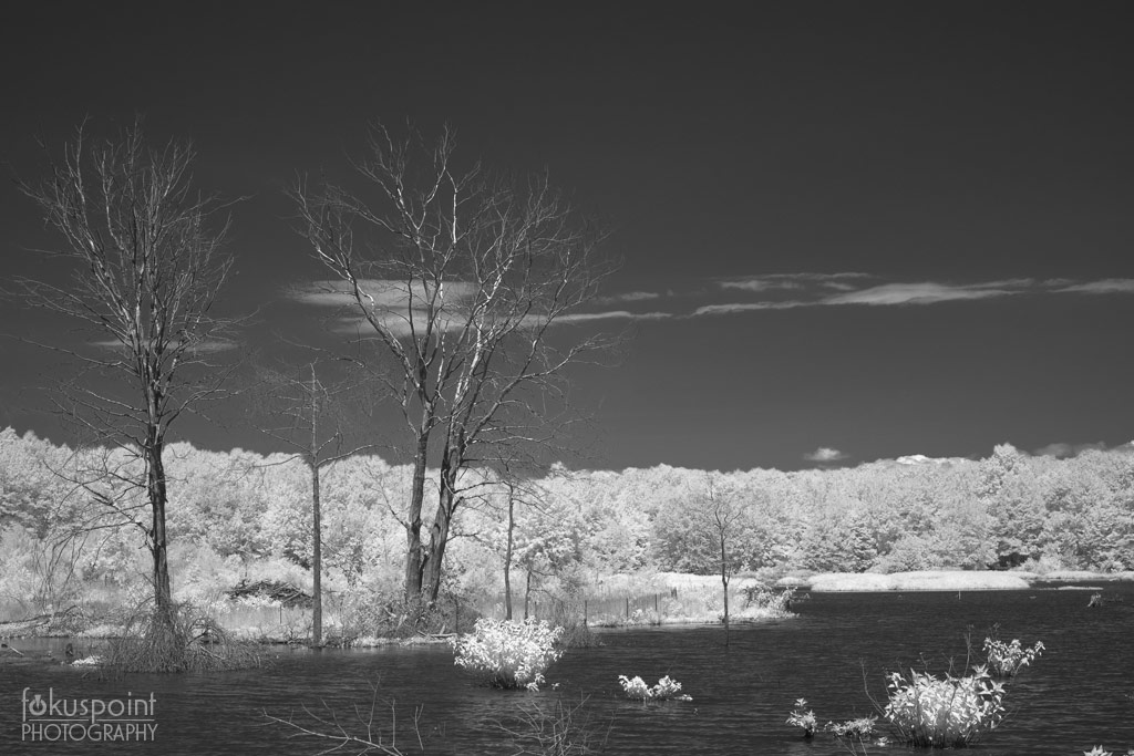 Huntley Meadows Park, Infrared