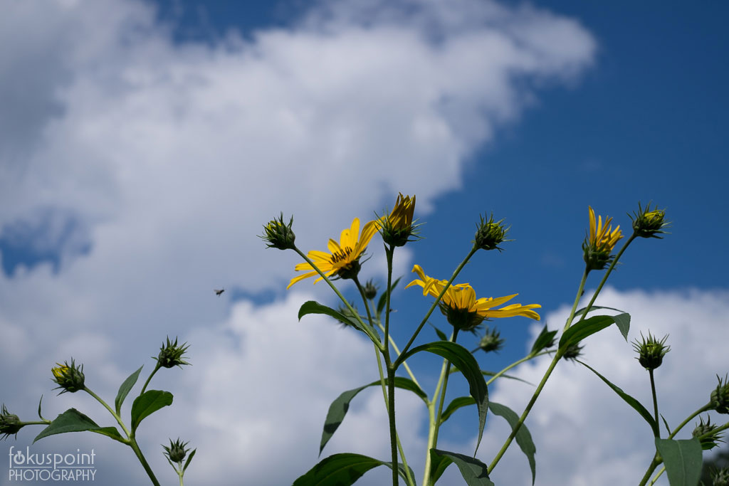 Sky and Yellow Flowers