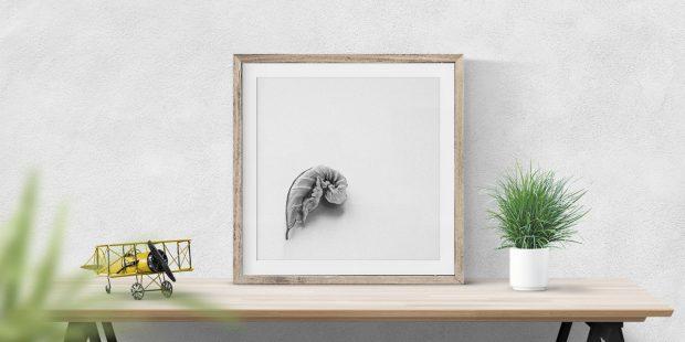 New Print: Curled Leaf